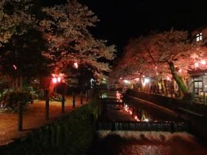 城崎温泉の夜桜