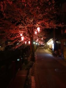城崎温泉の夜桜2